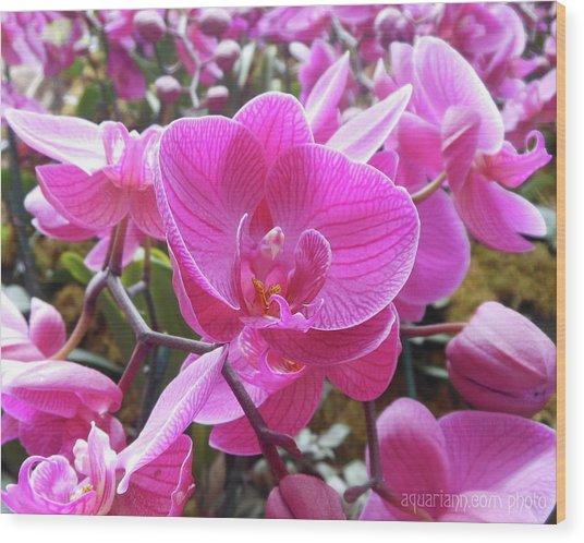 Fuchsia Flower Field Wood Print