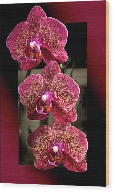 Fuchsia Orchids Oof Wood Print