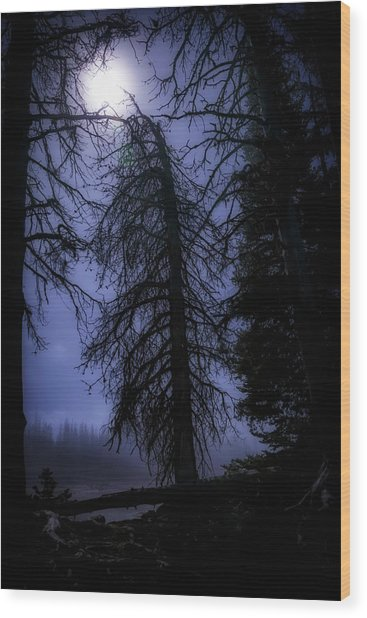 Full Moon In The Woods Wood Print