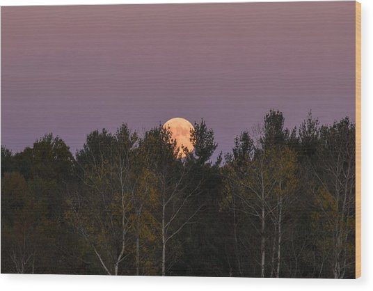 Full Moon Over Orchard Wood Print