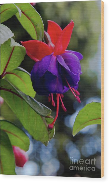 Fuschia Wood Print
