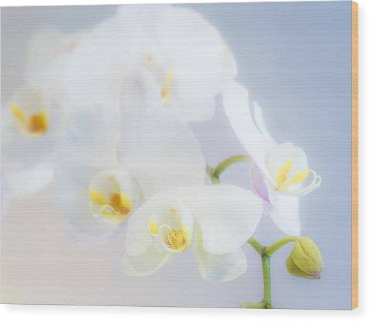 Gail's Orchids Wood Print