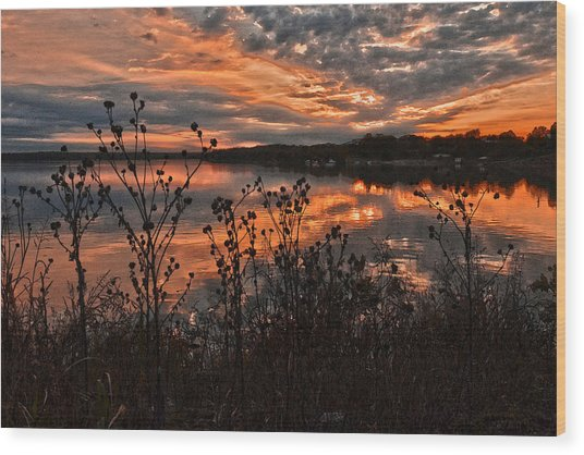 Gainesville Sunset 2386w Wood Print