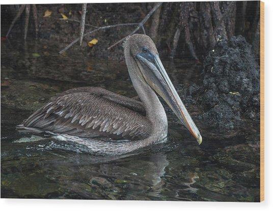 Galapagos Pelican Wood Print