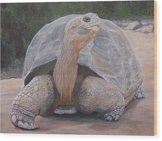 Galapagos Tortoise Wood Print by Jeffrey Oldham