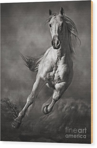 Galloping White Horse In Dust Wood Print