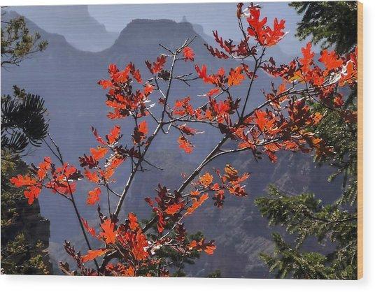 Gamble Oak In Crimson Fall Splendor Wood Print