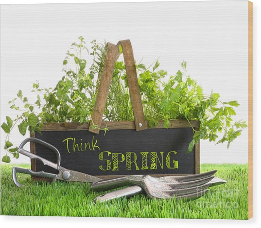 Garden Box With Assortment Of Herbs And Tools Wood Print