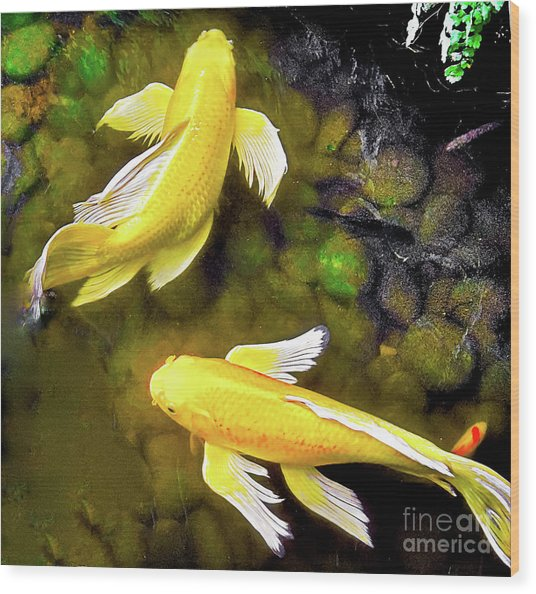 Garden Goldenfish Wood Print
