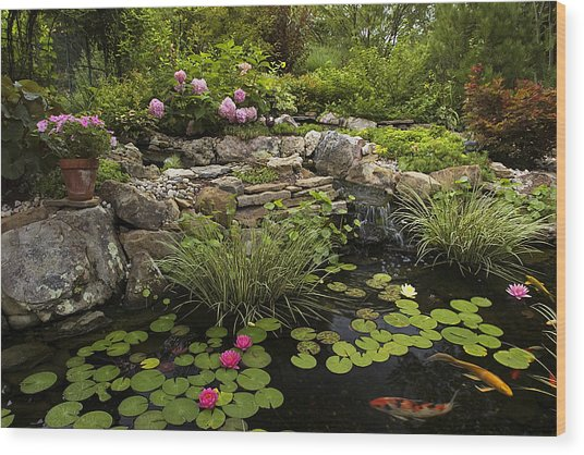 Garden Pond - D001133 Wood Print