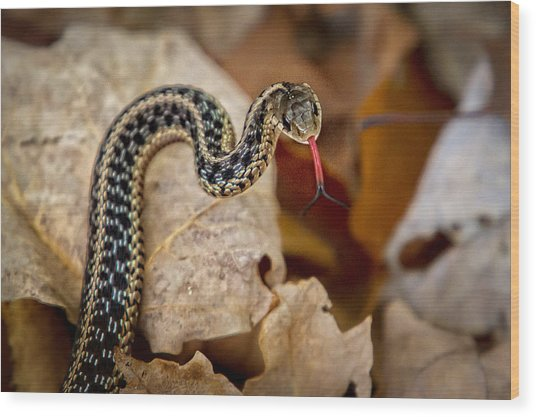 Garden Snake Wood Print