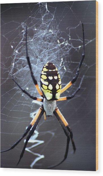 Garden Spider Wood Print by Bob Guthridge