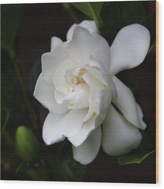 Gardenia - II Wood Print