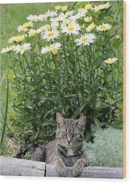 Garfield And Broadway Light Daisies Wood Print