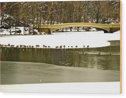 Gathering Of Ducks Wood Print