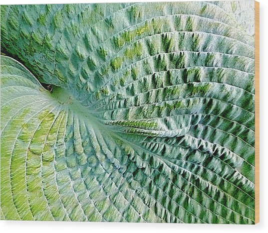 Gator Hosta Wood Print
