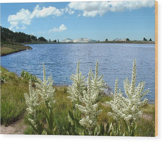 Gaylor Lakes And Queen Anns Lace Eastern Sierra Photo Wood Print