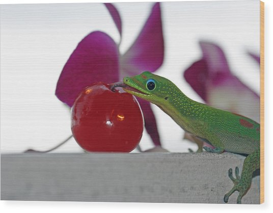 Gecko And Cherry Wood Print by Sue Mayor