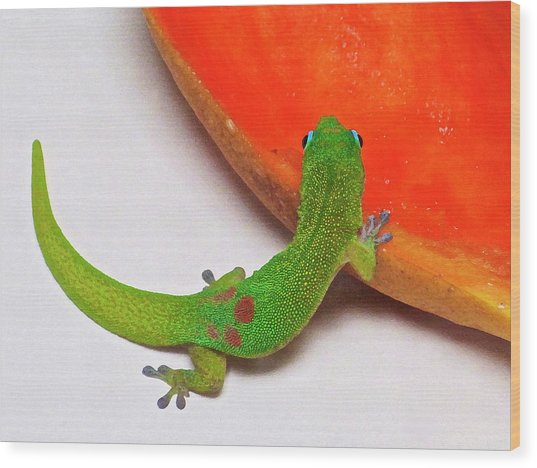 Gecko Eating Papaya Wood Print