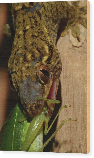 Gecko Feed Wood Print