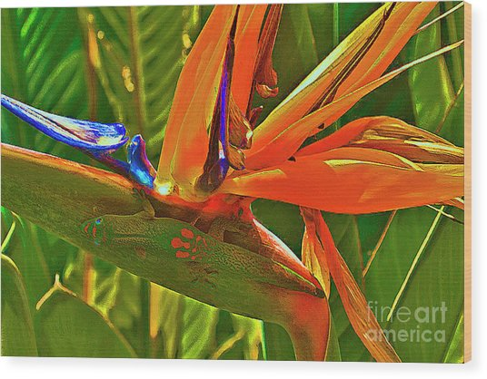 Gecko On Bird Of Paradise Wood Print