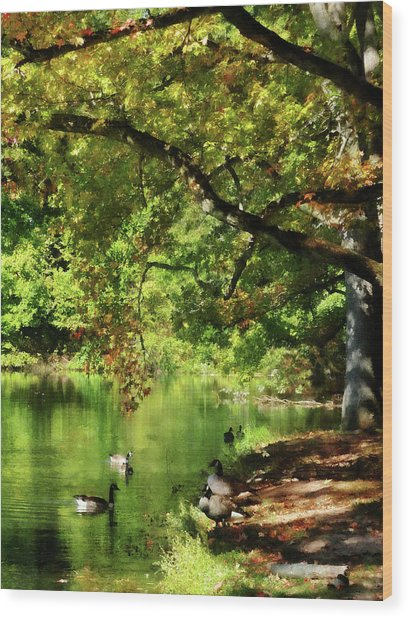 Geese By Pond In Autumn Wood Print by Susan Savad