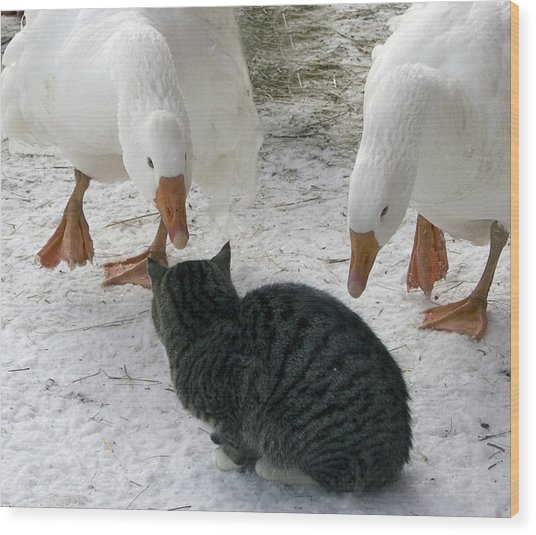 Geese Double Team The Barn Cat Wood Print by Laurie With