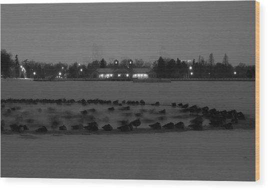 Geese In Frozen Lake Wood Print