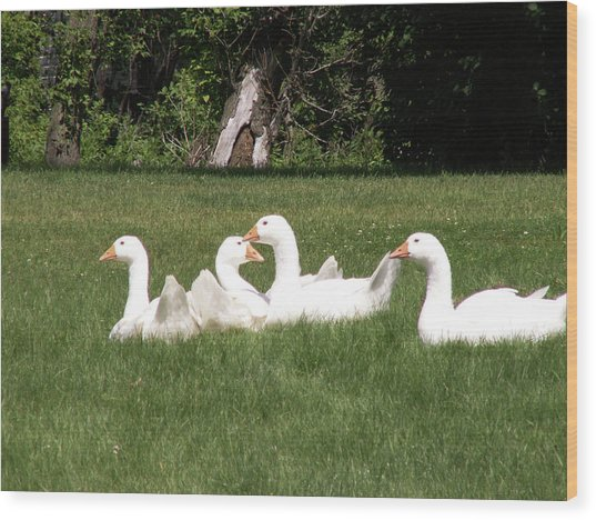 Geese In The Grass Wood Print