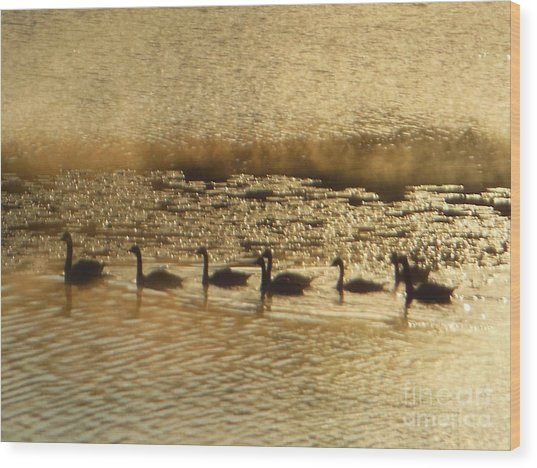 Geese On Golden Pond Wood Print