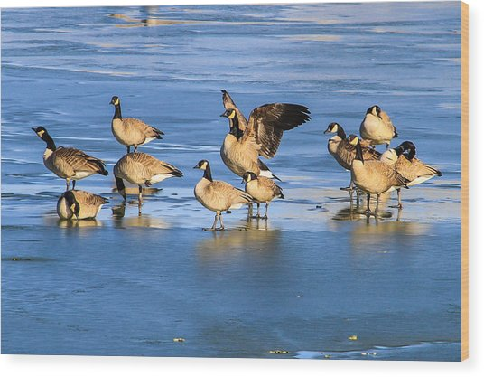 Geese On Ice Wood Print