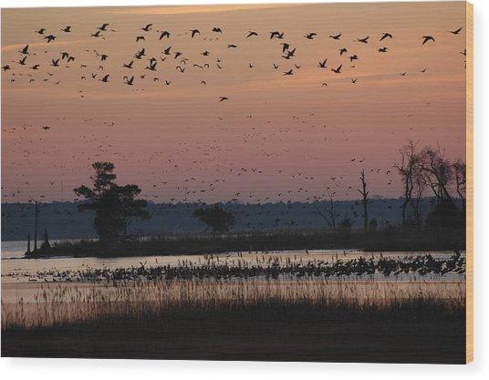 Geese On The Rise Wood Print by Marc Van Pelt