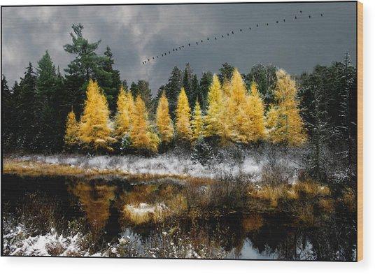 Geese Over Tamarack Wood Print