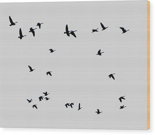 Geese Taking Off Wood Print by Richard Singleton