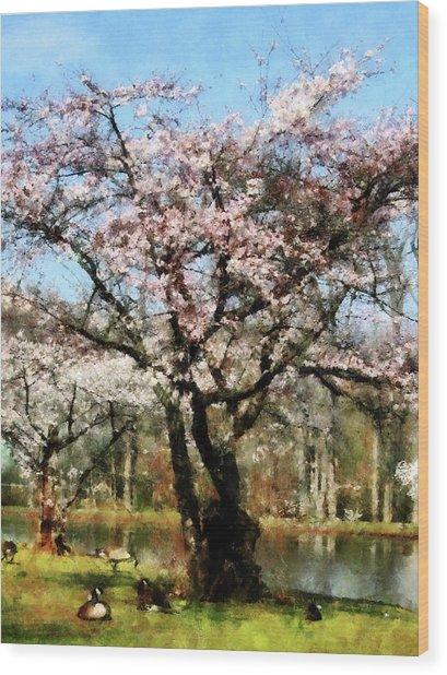 Geese Under Flowering Tree Wood Print by Susan Savad