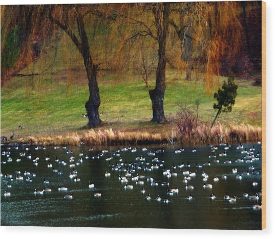 Geese Weeping Willows Wood Print