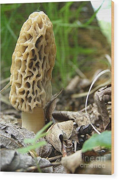 Gem Of The Forest - Morel Mushroom Wood Print