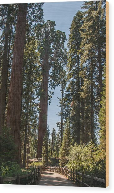 General Grant Tree Kings Canyon National Park Wood Print