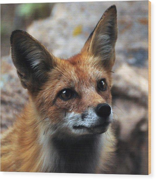 Gentle Fox Wood Print