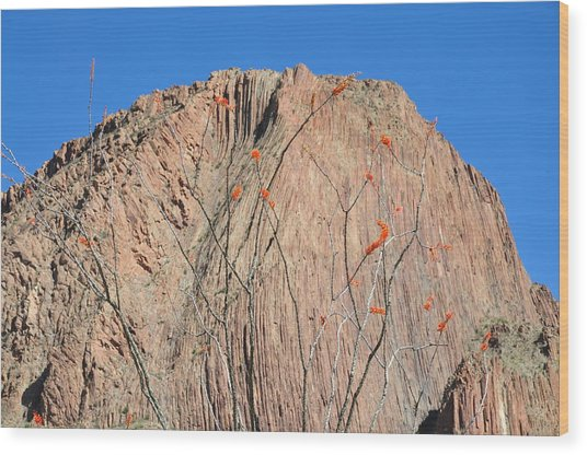 Geology Sans Cantus  Wood Print by Thor Sigstedt