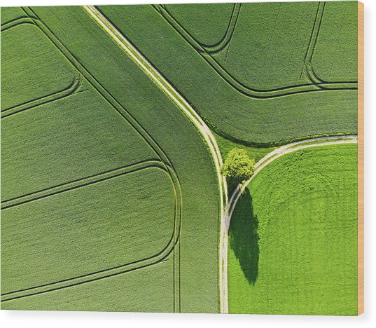 Geometric Landscape 05 Tree And Green Fields Aerial View Wood Print