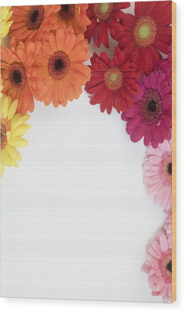 Gerbera Blooms Framed Wood Print