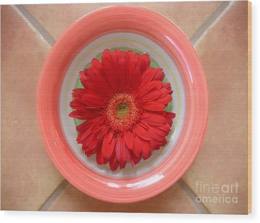 Gerbera Daisy - Bowled On Tile Wood Print by Lucyna A M Green