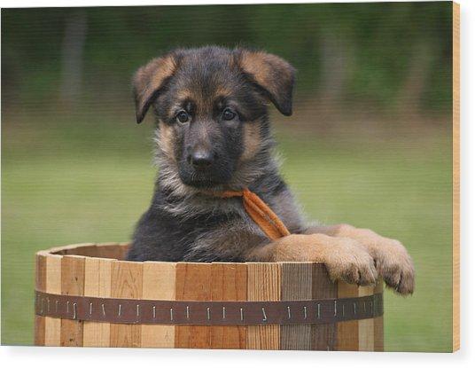 German Shepherd Puppy In Planter Wood Print