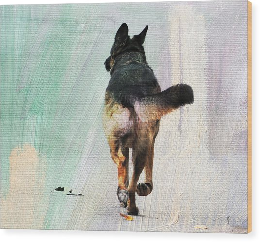 German Shepherd Taking A Walk Wood Print