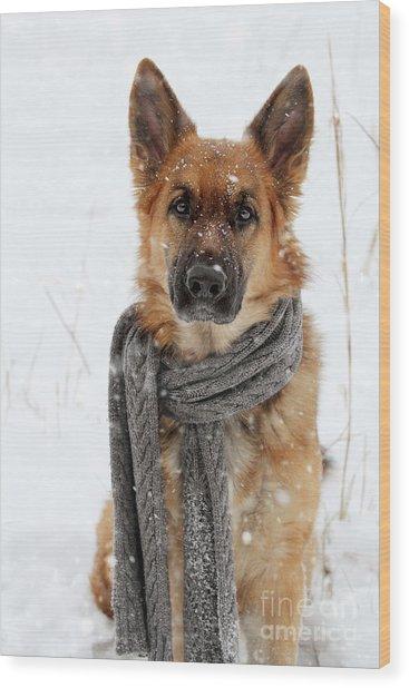 German Shepherd Wearing Scarf In Snow Wood Print