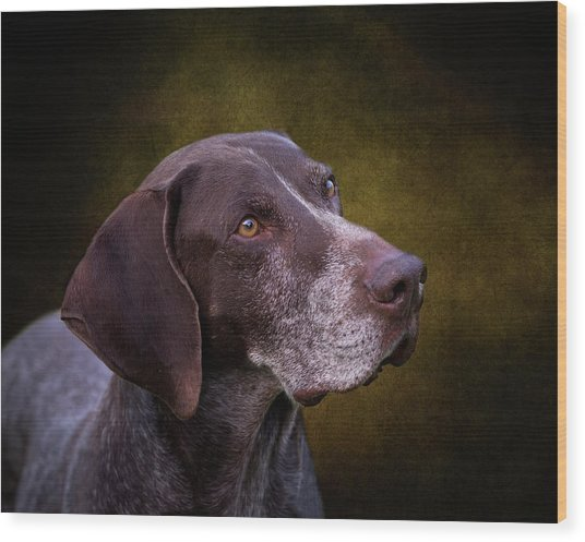 German Shorthaired Pointer Wood Print