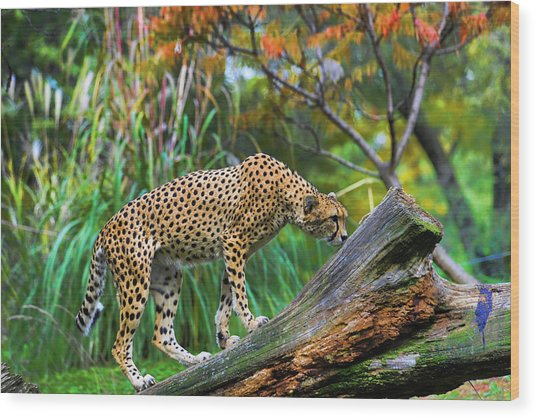 Getting The Scent Wood Print by Keith Lovejoy