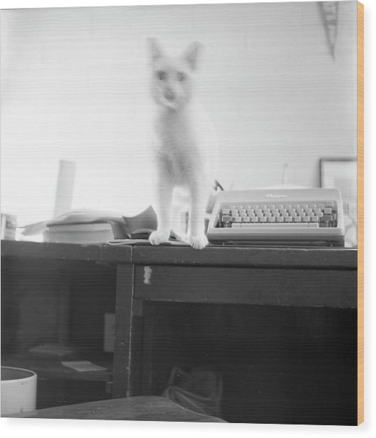 Ghost Cat, With Typewriter Wood Print