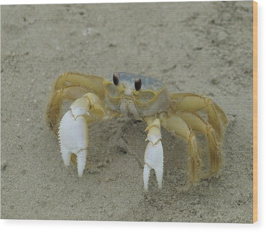 Ghost Crab - 1 Wood Print